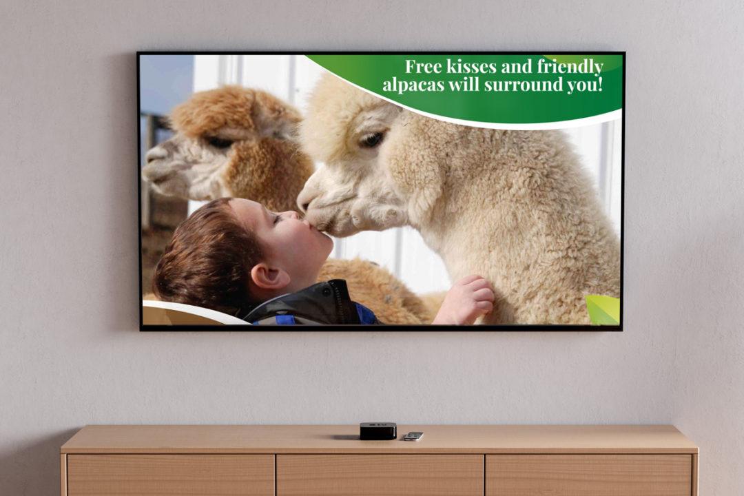Lippencott Alpacas 2021 National Alpaca Farm Show